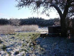Chat_dans_la_neige